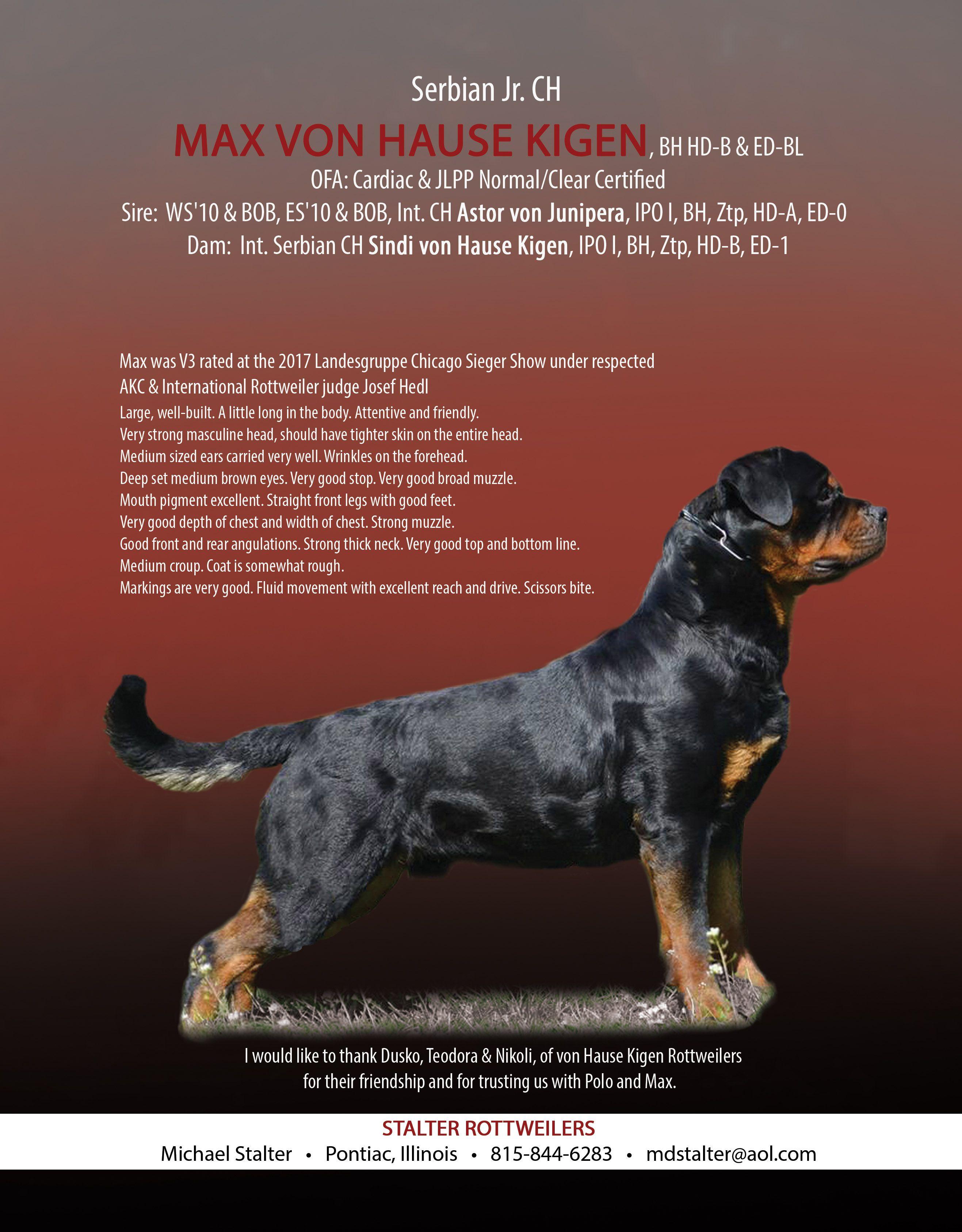 Stalter Rottweilers Michael Stalter Pontiac, Illinois 815