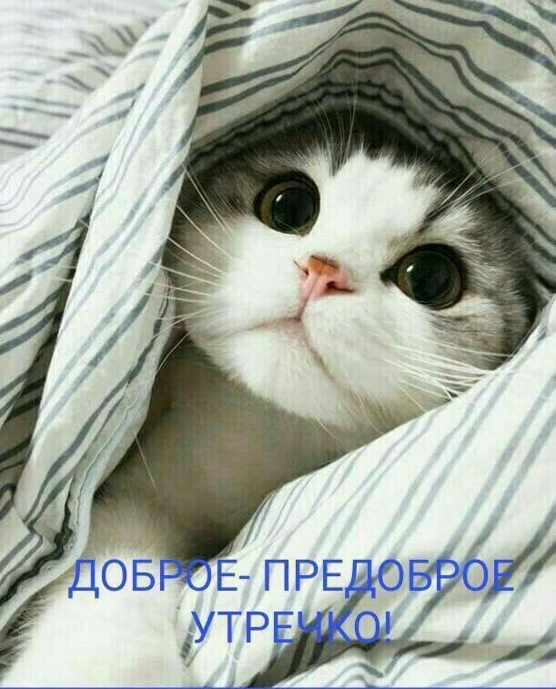 Pin Ot Polzovatelya Ira Shelonnikova Na Doske Kartinki Milye