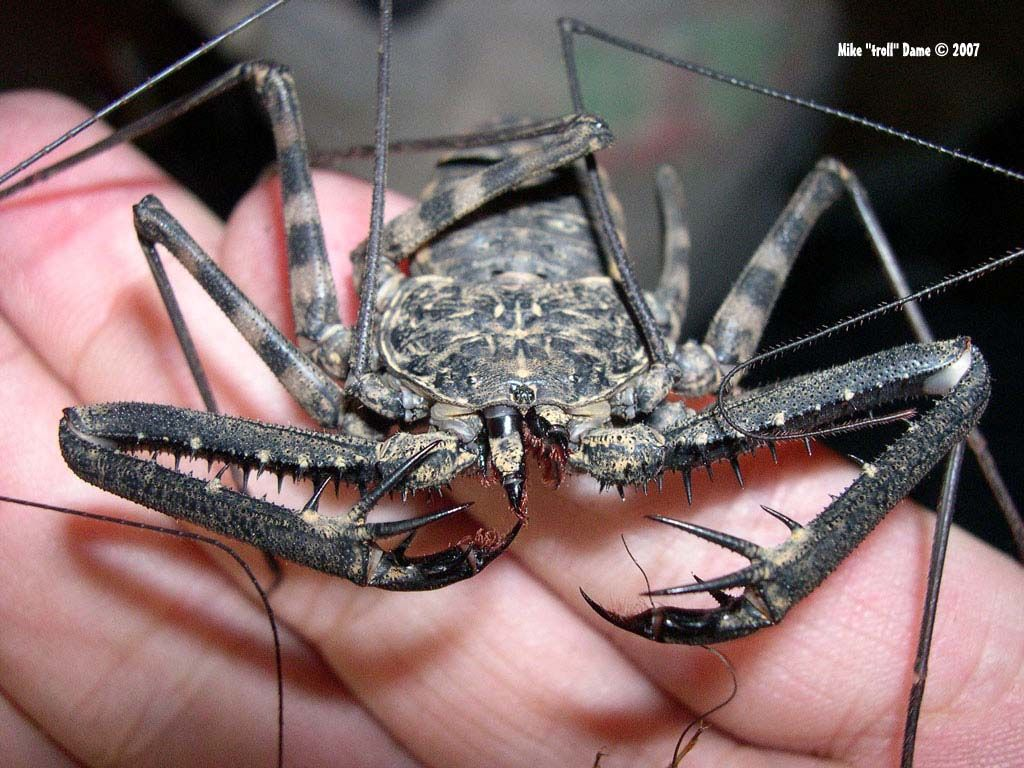 Damon Diadema My Beloved Monsters Pinterest Scary Bugs Macrophotograph Of Printed Circuit Board Round O By Sciencephotos Eight Legged Freaks Wicked Head Bands