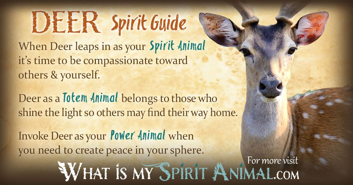 Deer Symbolism Meaning In 2018 My Stuff Pinterest Power