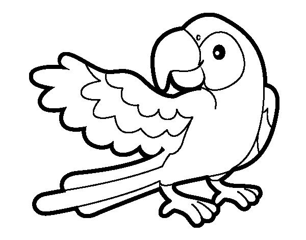 Dibujo de Loro con ala abierta para colorear | Pintar
