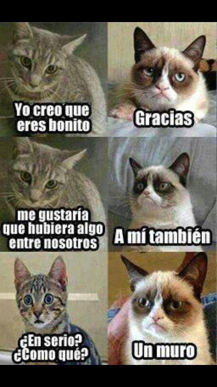 Pin On Grumpy Cat Grumps