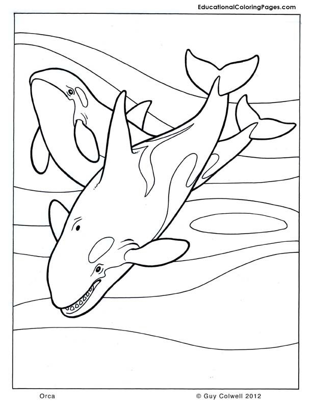 Orca Coloring Animal Coloring Pages For Kids Coloring Pages