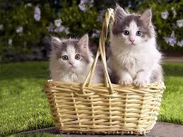 Resultado de imagem para imagens de gatinhos