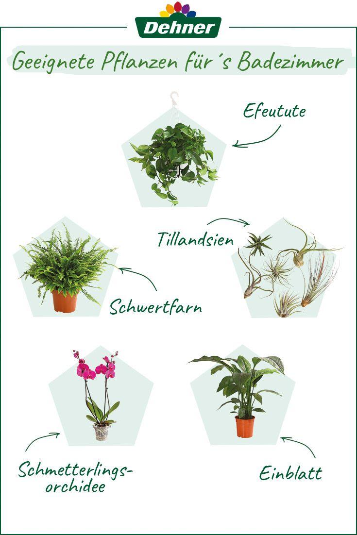 Badpflanzen Efeutute Schwertfarn Tillandsien Schmetterlingsorchidee Einblatt In 2020 Einblatt Pflanzen Coole Pflanzen