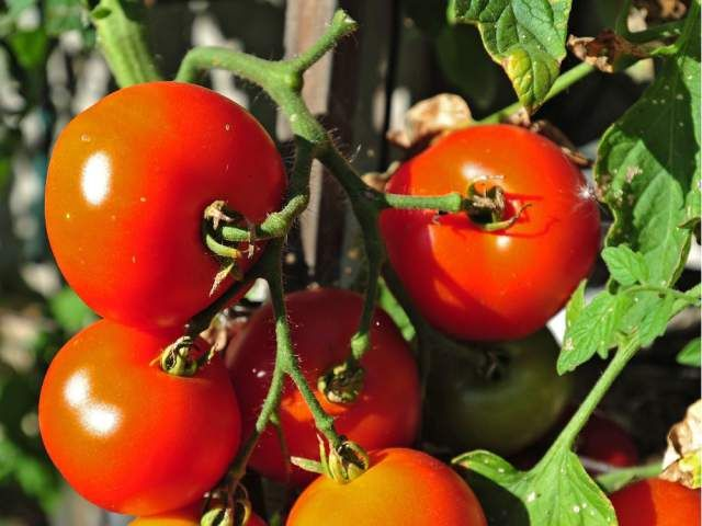 Growing Things: Protect your tomatoes from blossom end rot