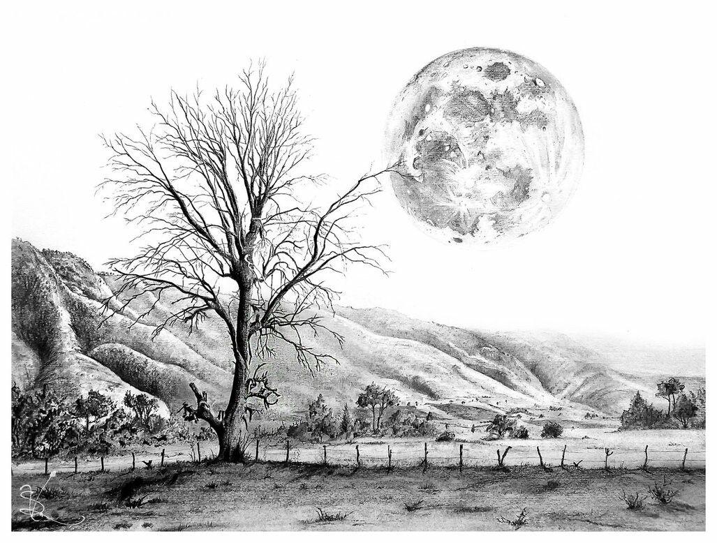 Easy drawings for beginners tree drawings drawing trees pencil art drawings nature