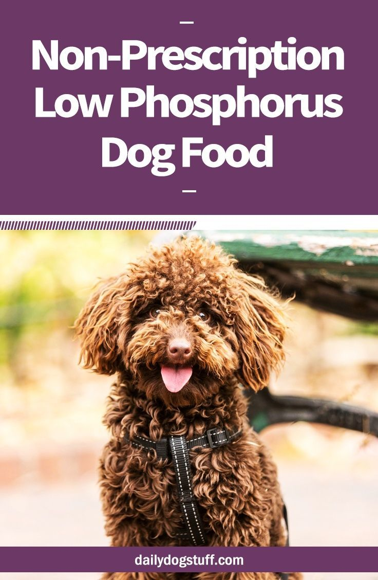 low phosphorus foods for dogs