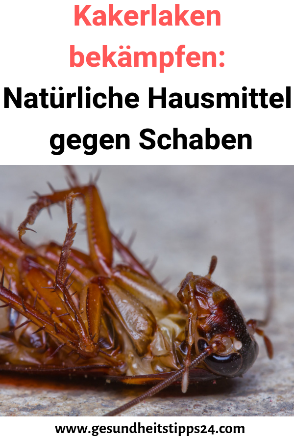 Kakerlaken Bekampfen Naturliche Hausmittel Gegen Schaben Schaben Kakerlaken Bekampfen Kakerlaken