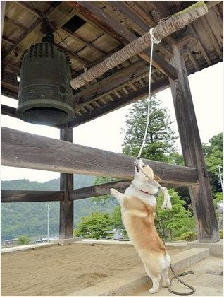 Ringing a big bell!!!