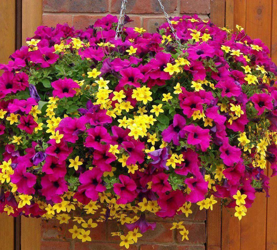 Pink Lemonade Garden Pinterest Gardens Container Gardening