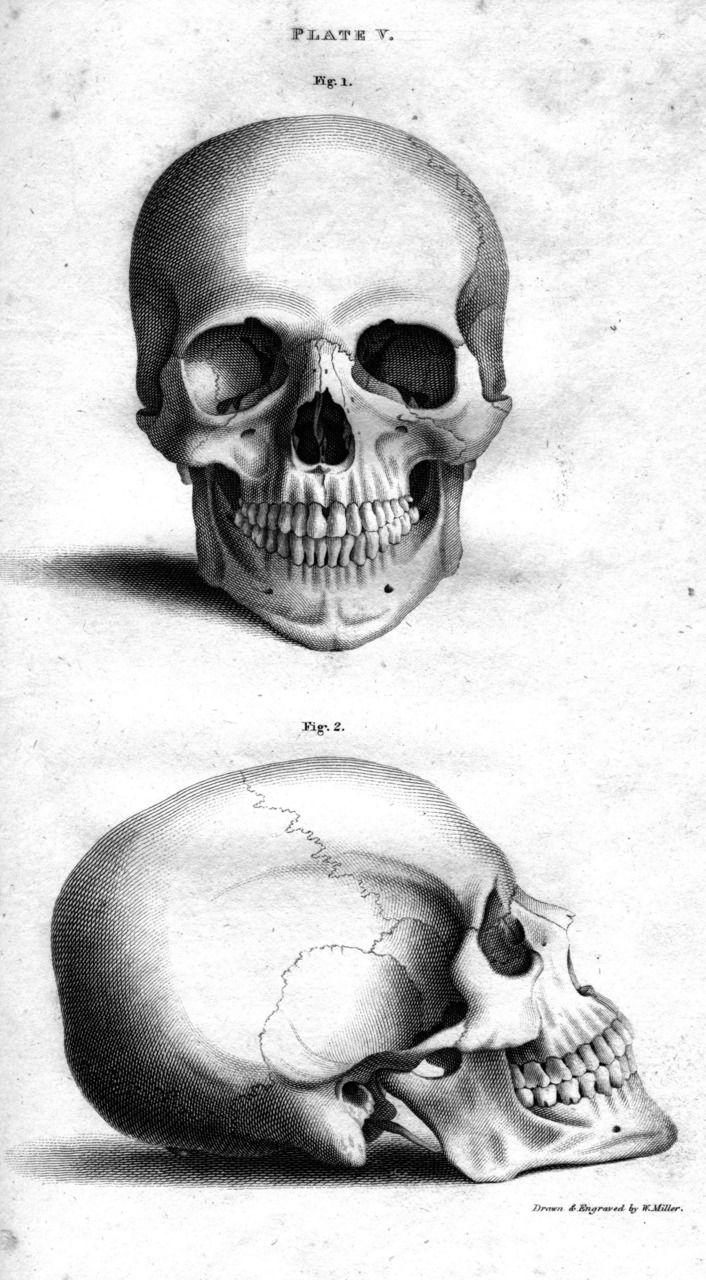 October 2012 | Skull illustration, Skull, Skull drawing