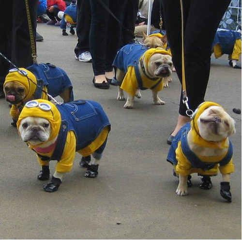 These dogs in wonderful matching blue overalls. | The 31 Most WTF Pictures Of Dogs Being Dogs