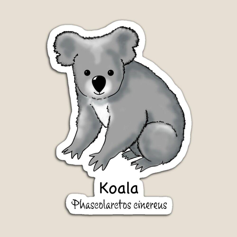 Endangered Animals Of Australia Koala Phascolarctos Cinereus Magnet By Stephjchild Australia Animals Endangered Animals Animals