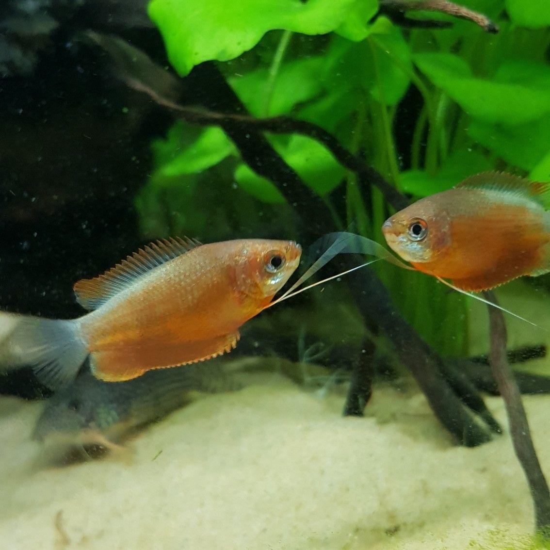 Haustierbedarf Fische & Aquarien Honig Aquarium
