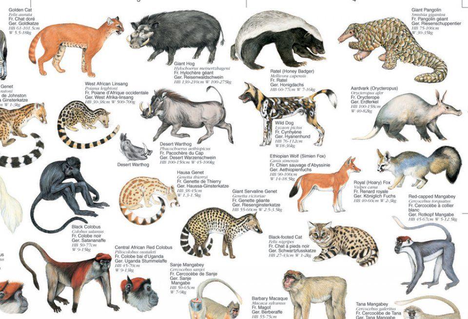 animal, definition Google Search (con imágenes)