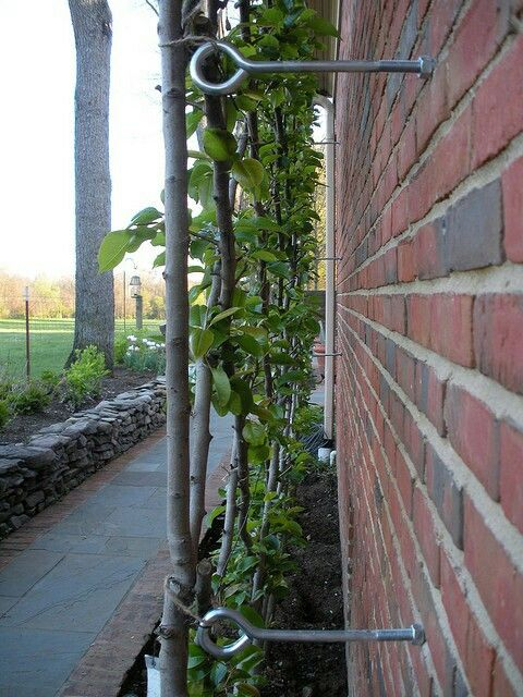 Red Brick Garden Wall With Plant Support Wires