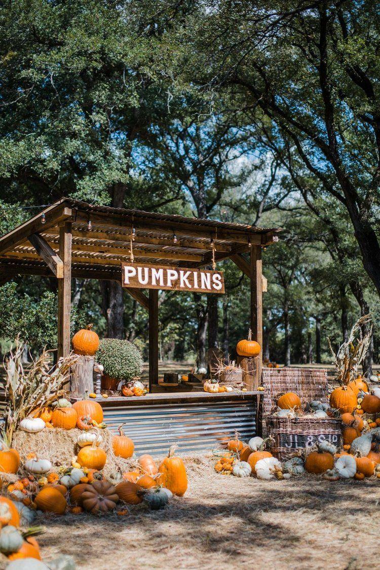 Scpf Pumpkinshack Jpg Pumpkin Patch Farm Pumpkin Farm Pumpkin Stands