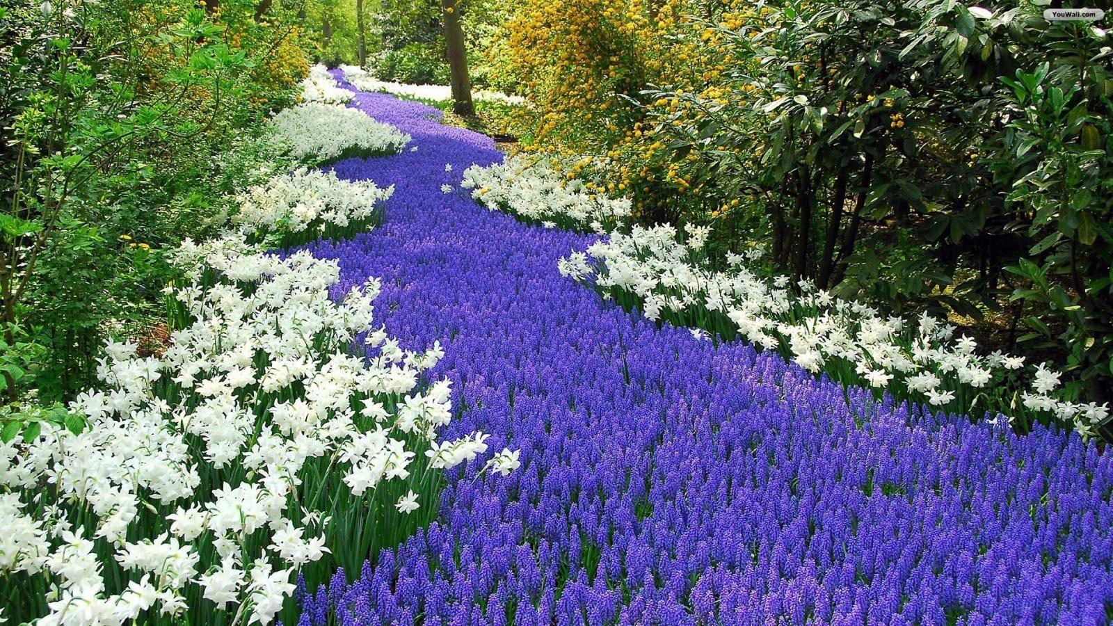 Flower Garden Wallpaper beautiful flower garden wallpapers download - imghd : browse and