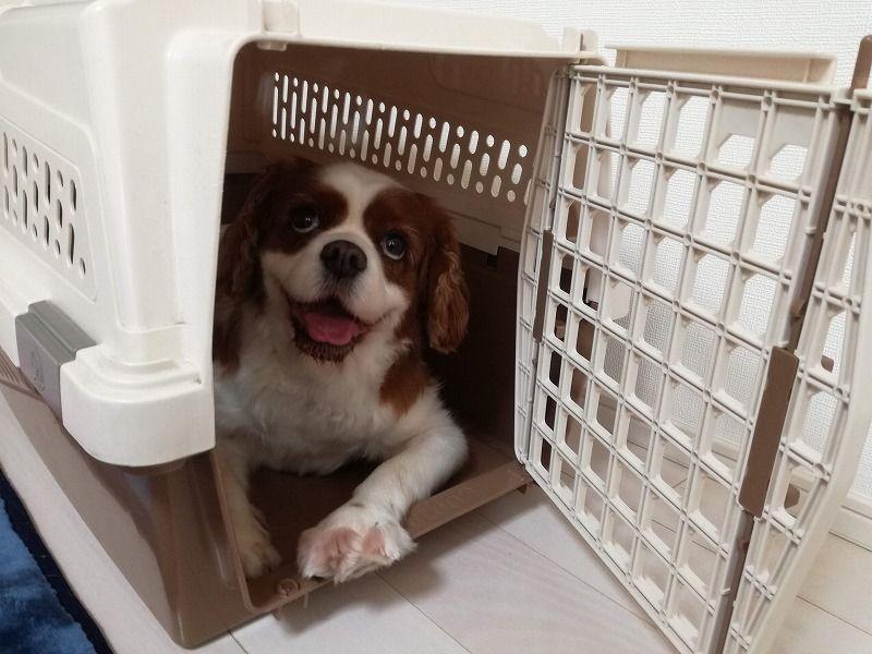 エピナール那須 犬連れ那須の旅 我が家のおすすめプラン まちろブログ 犬 釣り 魚 エピナール