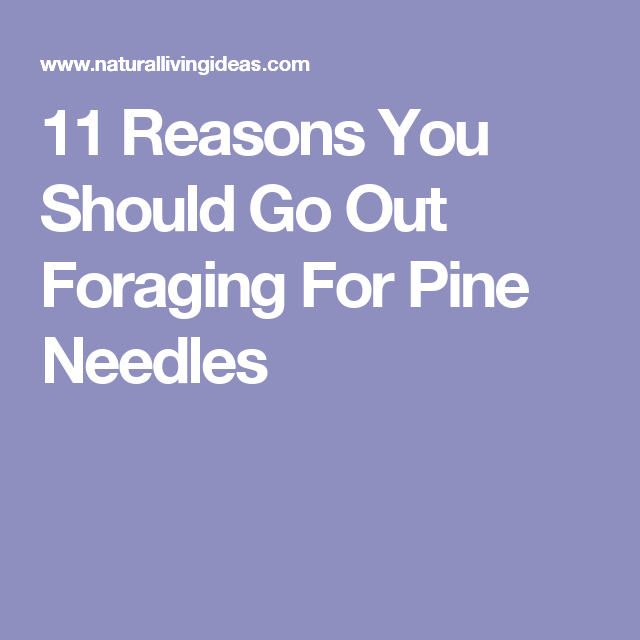 11 Reasons You Should Go Out Foraging For Pine Needles