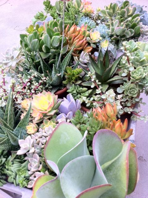 Succulents | Flickr - Photo Sharing!