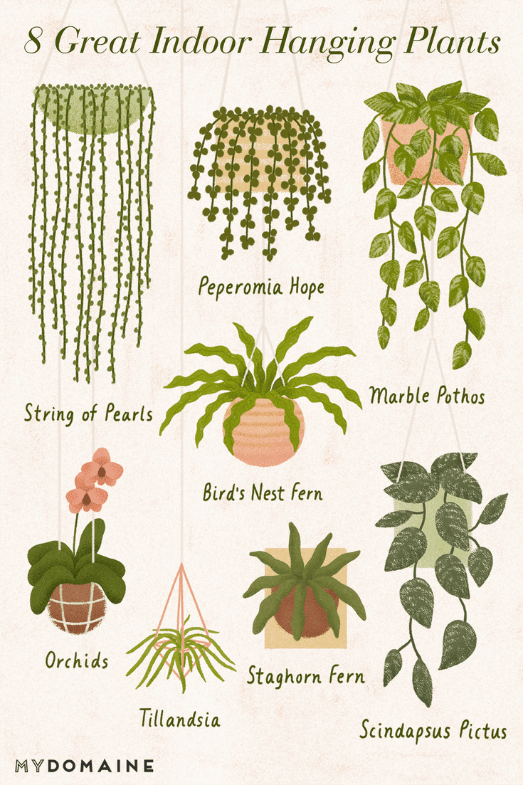 The 10 Best Indoor Hanging Plants to Turn Your Hom