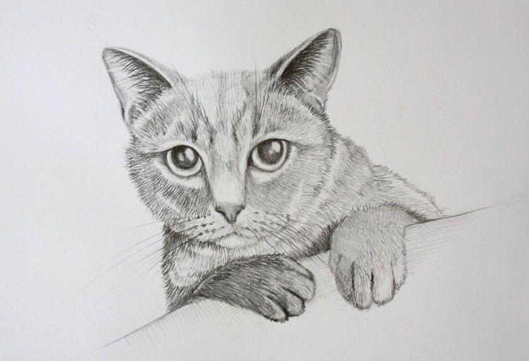 Katze Bleistift Tierzeichnung Bleistiftzeichnung Zeichnungen