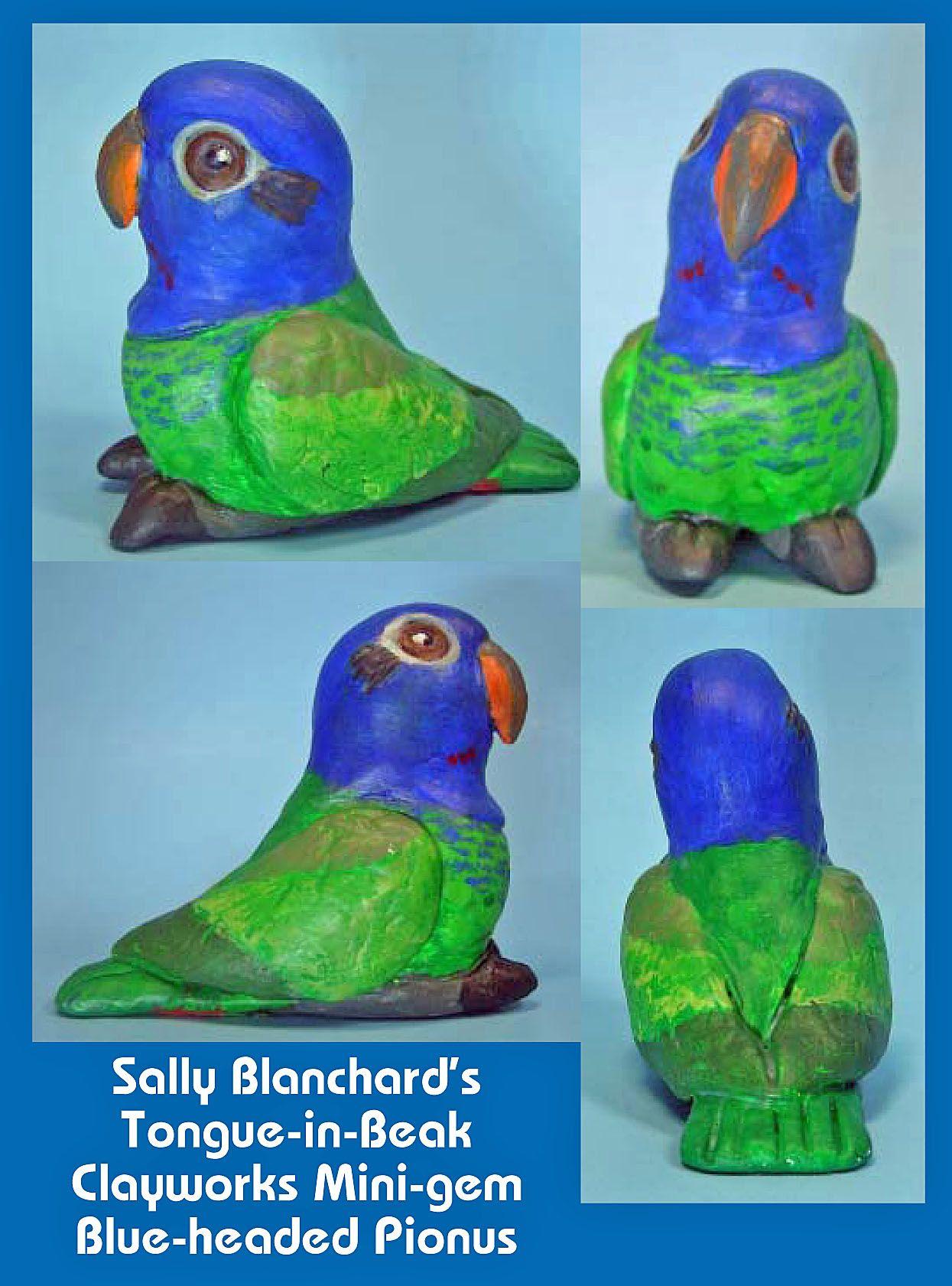Blue-headed Pionus Mini-gem Available