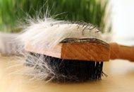 Katzenhaare Entfernen katzenhaare entfernen leicht gemacht tipps katzen