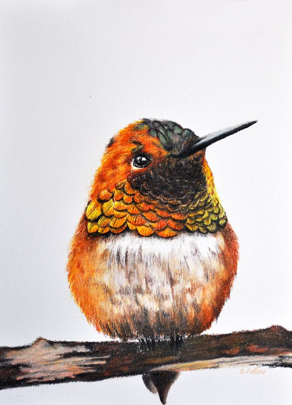 Original Colored Pencil Bird Drawing Realistic Hummingbird ...