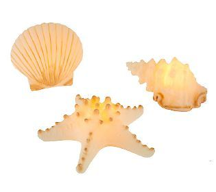New Set Of 3 Candle Impressions Seashell Flameless Candles W Timer