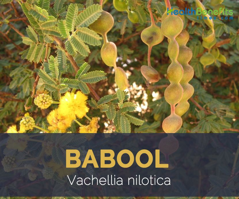 Babool Facts And Health Benefits Ayurvedic Plants Medicinal Plants Plant Health