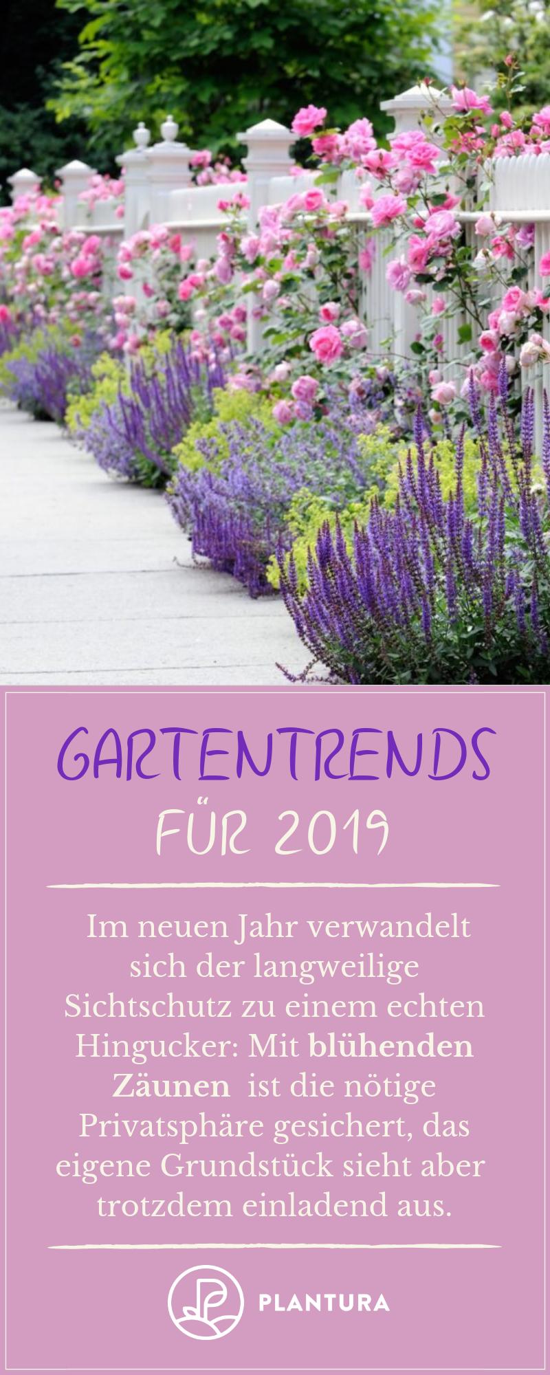 Gartentrends 2019: Unsere Top 10 für Ihren Garten - Plantura