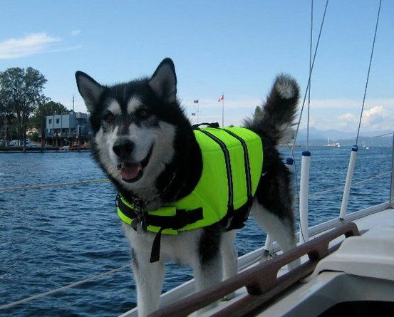 My Future Dog Meeko Will Love To Go Out On The Water Animals
