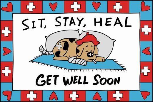 Image result for get well dog