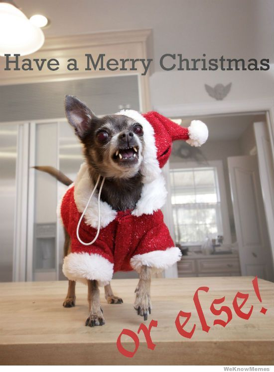 Have A Merry Christmas Or Else Chihuahua Rrrr Christmas Animals Christmas Memes Funny Merry Christmas Meme