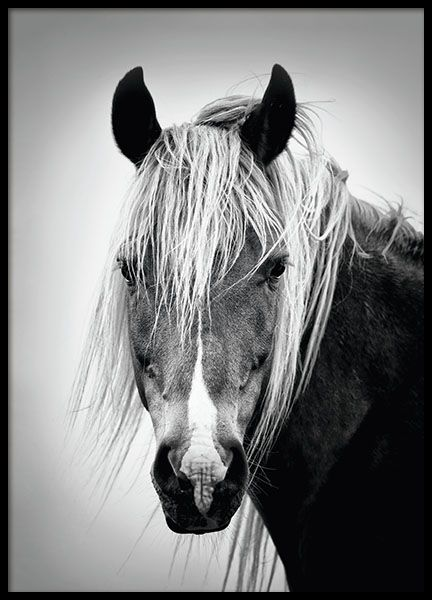 Bronco poster online postersblack and white posterswhite horsesblack and white photographyphoto