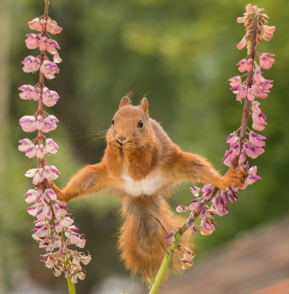 In Pictures The Comedy Wildlife Photography Awards 2018 Bbc News