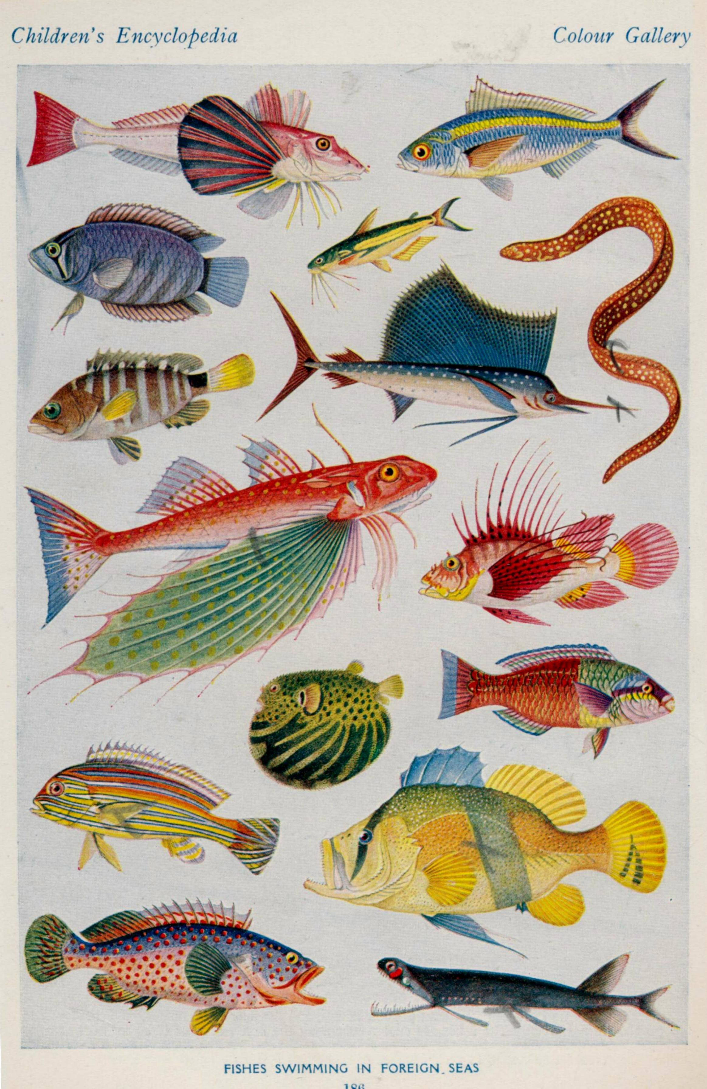 Larousse Illustrations Scientific Illustration Fish Art