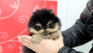 I am angry because my cuteness has been fluffed up so high that I can knock you out with one smile