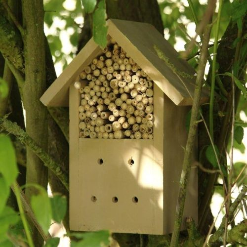 Have you made a home for insects? #homesfornature