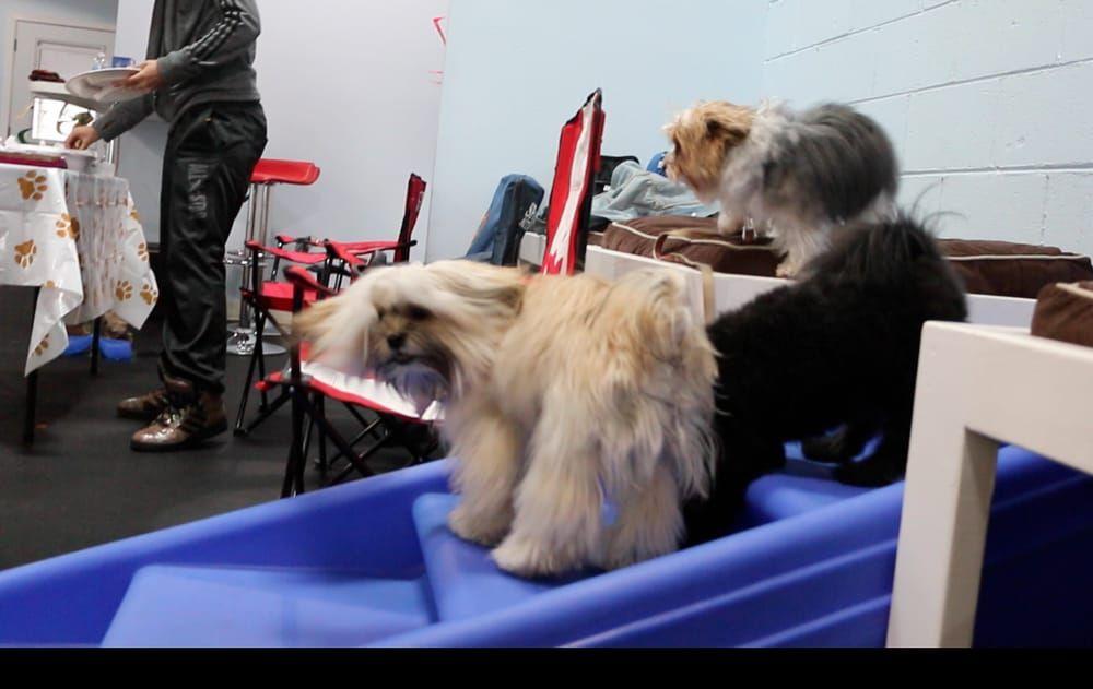 Dog grooming SpaGo Dog Grooming & Doggie Daycare