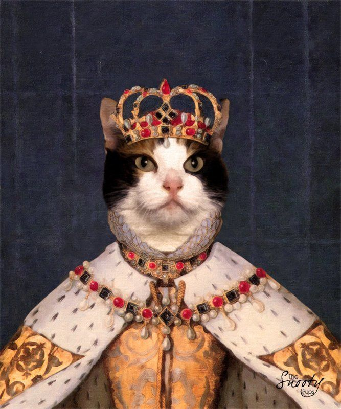 хочу королева кошка картинки размеру обзору ним