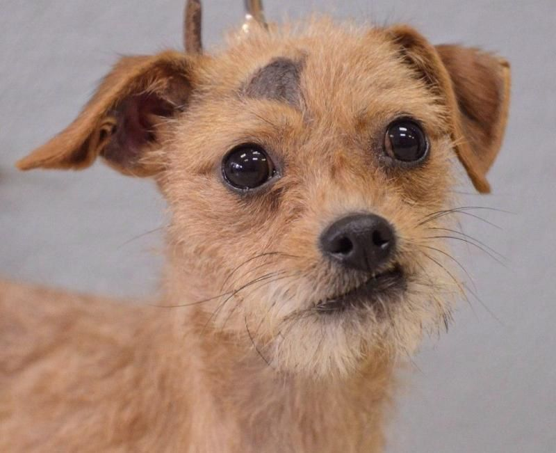 11+ Sunny skys animal rescue images