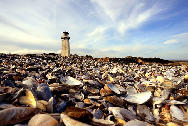 Southerness and seashells by iancowe, via Flickr
