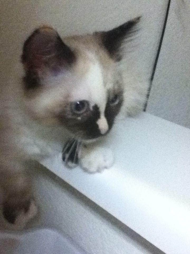 Feline Rescue Inc Cat Adoption Feline Cat Lovers