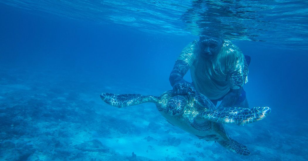 Fijian turtle hunters have become their conservationists. (statistical analysis)