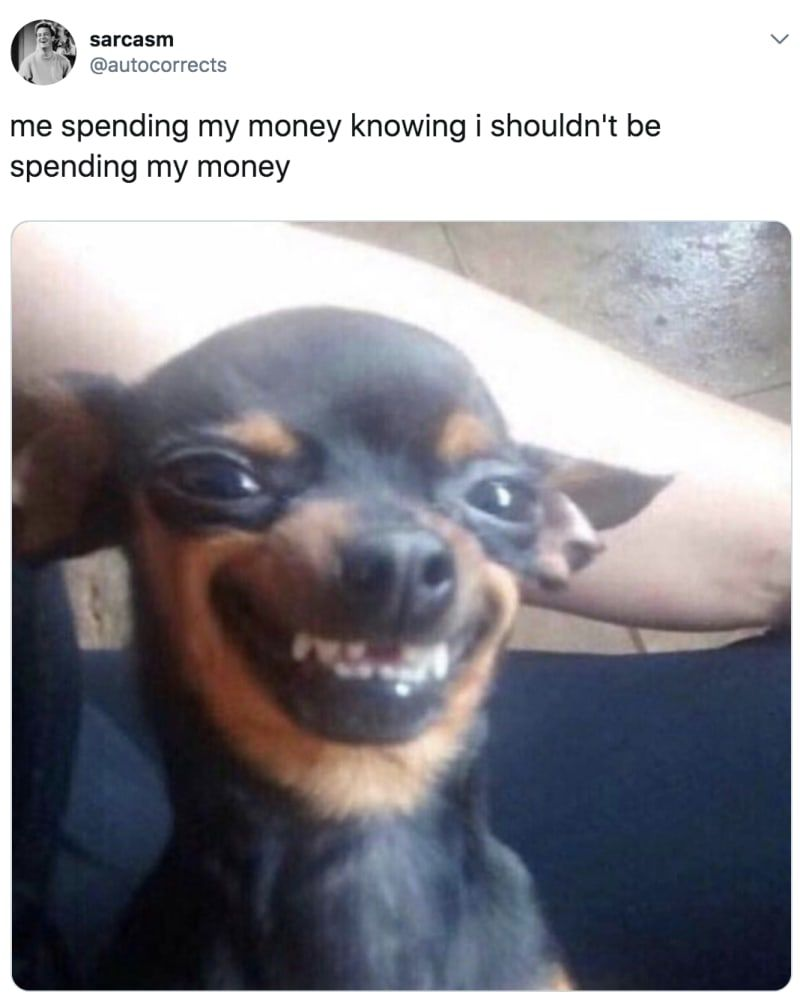 Funny Chihuahua Memes : funny, chihuahua, memes, Chihuahua, Memes, That'll, Laugh, Harder, Should, Funny, Animal, Pictures,, Memes,