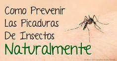 Los repelentes naturales contra insectos que contienen picaridina o aceite de eucalipto limón funcionan mejor que el DEET para repeler los insectos. http://articulos.mercola.com/sitios/articulos/archivo/2015/06/06/repelente-para-insectos-natural.aspx